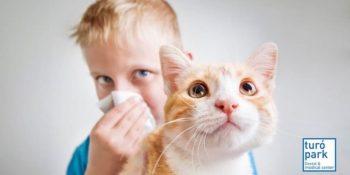 Alergias del gato